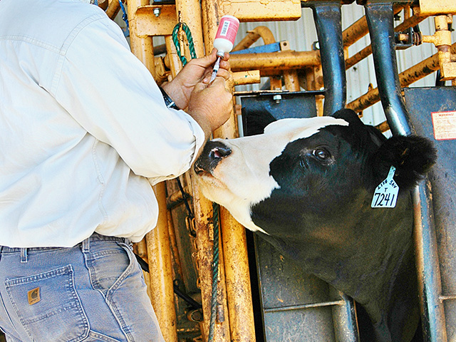 Pinkeye is a costly disease that can lead to other problems including weight loss and milk production. (DTN/Progressive Farmer photo by John Howle)