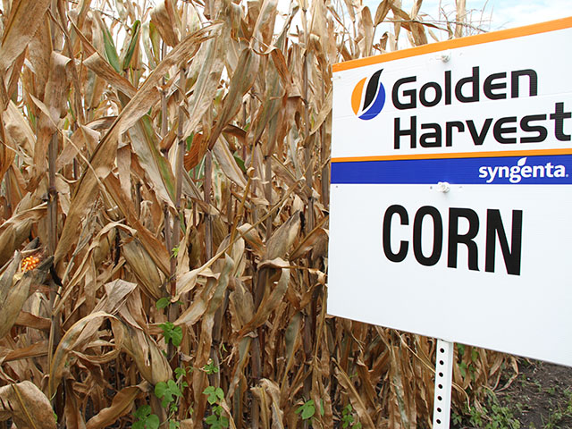 Agrisure Duracade hybrids will continue to be sold by a limited number of seed companies for the 2018 season, including Golden Harvest. (DTN photo by Pamela Smith)