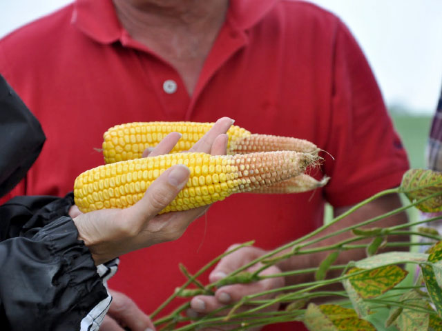 All is not what it seems in crop fields this year, with early season damage and poor pollination lurking in some fields. (DTN file photo by Katie Dehlinger)