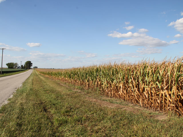 The road to harvest is growing shorter, particularly in areas that have seen drought conditions, like these Illinois fields. (DTN photo by Pamela Smith)
