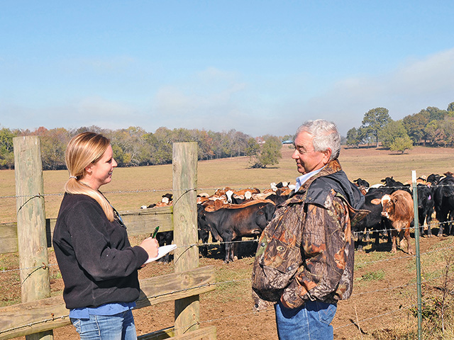 Before Jimbo York and daughter, Mary Lemuel Wheeler, started a test-and-cull program for Johne's in their commercial cow herd, they lost five to eight cows a year to the wasting disease.(DTN/Progressive Farmer photo by Becky Mills)