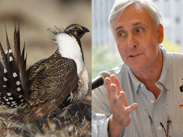 Whit Fosburgh, president and CEO of the Theodore Roosevelt Conservation Partnership, criticized a Department of Interior decision to reopen the conservation agreement on the greater sage grouse, a bird that was close to getting an Endangered Species Act listing just a few years ago. (Greater sage grouse photo by USFWS Pacific Southwest Region; Fosburgh photo by Chris Clayton)