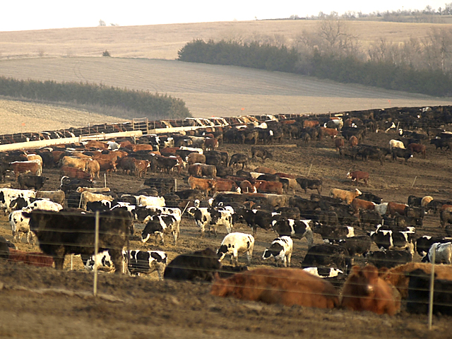 U.S. beef was among the products targeted by Canada's government to be hit by tariffs. (DTN file photo)