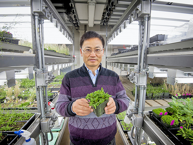 Jian-Kang Zhu, Purdue University plant biologist, studies how plants respond to harsh environments -- how they manage to survive in the face of drought, too much salt in the soil or when the weather is too hot or cold. (Photo courtesy of Purdue Agricultural Communication / Vincent Walter)