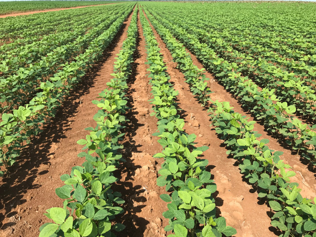 Soybean planting is getting close to wrapping up in Mato Grosso, the largest crop production state in Brazil. This field of more than 1,000 hectares (2,471 acres) took more than a week to plant. (DTN photo by Lin Tan)