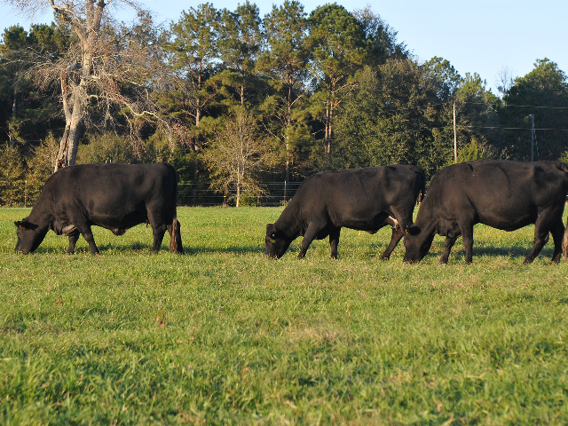 Fewer large animal veterinarians, and new guidelines for antibiotic use, mean it may be time to rethink treatment for common herd problems. (DTN/Progressive Farmer photo by Becky Mills)