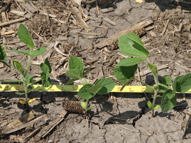 Uniform seed placement is key when lowering soybean seeding rates. (DTN photo by Pamela Smith)