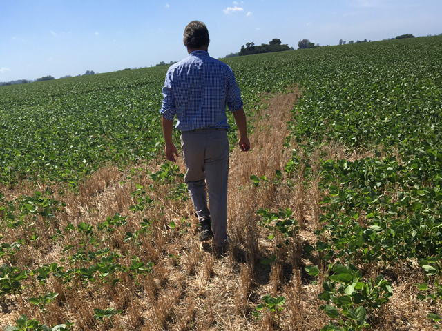This is a typical scene in Argentina in late-planted soybean fields where plant failures and underdevelopment result in soybeans not fully covering wheat straw from the previous wheat crop. This is abnormal for this time of the year. (Photo courtesy of Ignacio Greco)