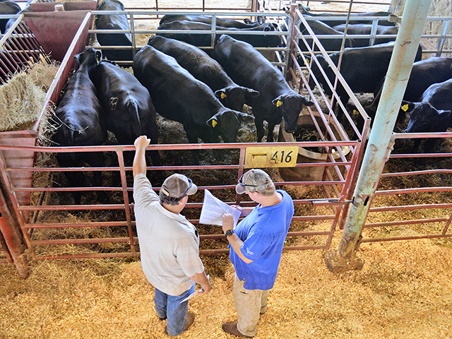 "Dr. Ken McMillan relies on Dr. Jim Floyd's ""Seven Quality Checks"" to make good culling decisions and NCBA's little Redbook for recordkeeping. (Progressive Farmer photo by Victoria G. Myers)"