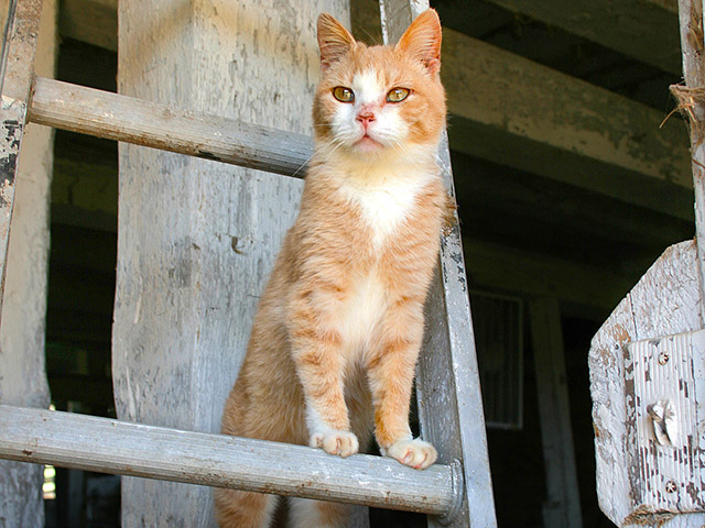 A high fever and no appetite are signs cats may have been exposed to a tick-borne disease.(Progressive Farmer photo by Mark Parker)