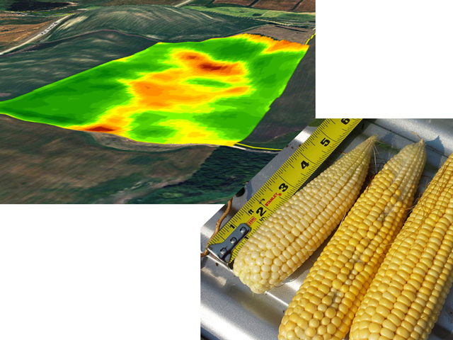 Critics of the USDA WASDE report, such as Gro Intelligence, say USDA should rely more on satellite data, but USDA says field sampling and farmer surveys are still useful tools. (DTN file images)