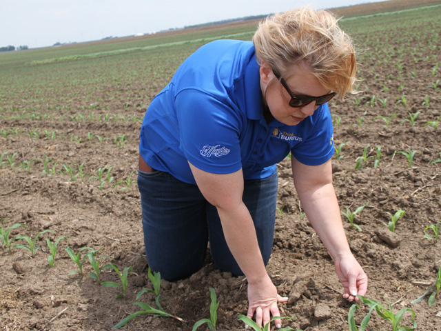 Burrus agronomist Stephanie Porter scouts for early season corn problems -- insects, disease, weather damage and planter mistakes. (DTN photo by Pamela Smith)