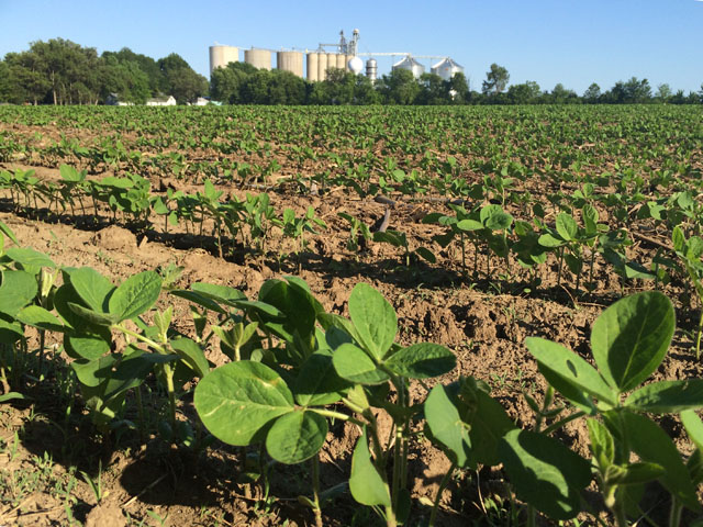 June-planted soybeans can thrive, if the right production practices are used, such as increasing seeding rates, narrowing row spacing and holding off on maturity group changes until mid-to-late June. (DTN photo by Pamela Smith)