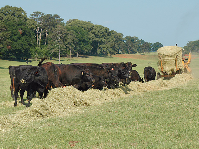 These four steps can cut your feed bill without sacrificing body condition.(Progressive Farmer photo by Becky Mills)
