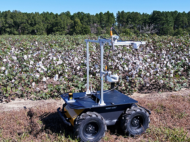Research is under way to build a cotton-harvesting robot that would constantly patrol the field and pick the bolls as they open. (Photo courtesy of Clemson University)