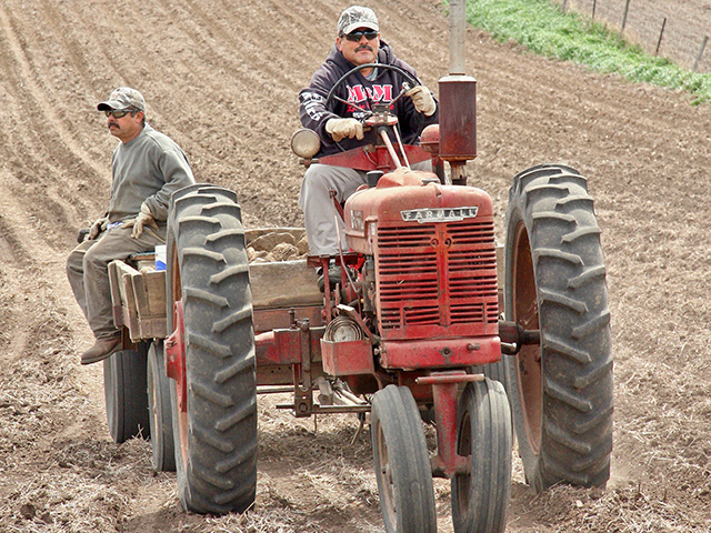 Enrique Ceja (left) and Omar Orosco remove large rocks to help prepare land for planting at HF Farms in Iowa. (DTN/The Progressive Farmer photo by Des Keller)