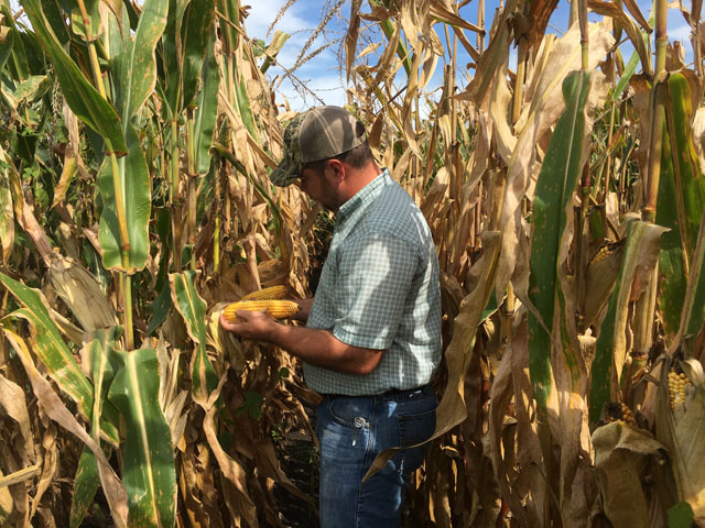 Scouting fields and planning harvest are top of mind for farmers this week, but the trade war looms large in their minds as well. (DTN photo by Pamela Smith