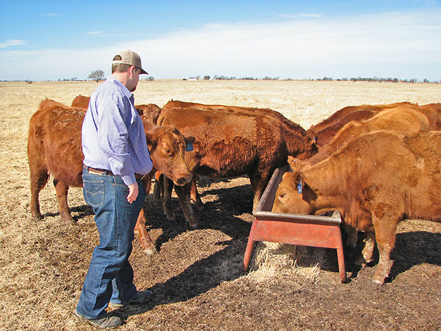 Thomas Glascock says he doesn't baby the Red Angus seedstock herd he's building. He's focused on moderate size and functional females that do well on limited inputs.(DTN/Progressive Farmer photo by Del Deterling)