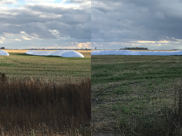 Pictured is wheat stored in silo bags in fields north of Glenburn, North Dakota. Pictures courtesy of Jeff Kittell, merchandiser for Border Ag and Energy, Russell, North Dakota