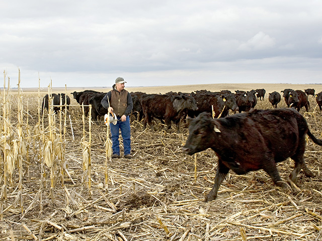 Doug Sieck says successfully grazing a cow herd on a corn field takes detailed planning and daily management. (Progressive Farmer photo by Dawn Sahli)