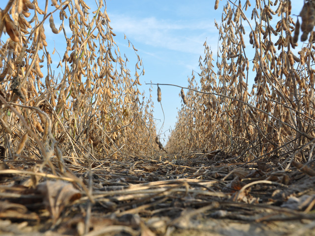 Rain and even snow has delayed soybean harvest in parts of the Midwest this past week, which has left some growers with plenty of time to think about 2019 seed choices. (DTN photo by Emily Unglesbee)