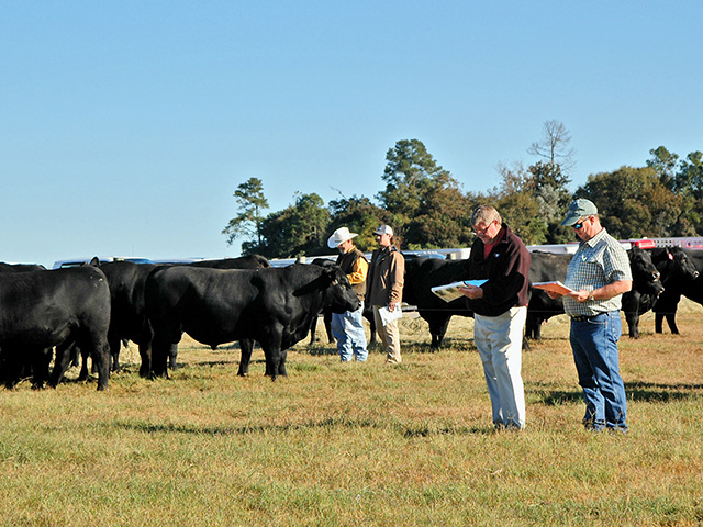 Selection indexes reduce data overload to help meet herd goals.(Progressive Farmer photo by Becky Mills)