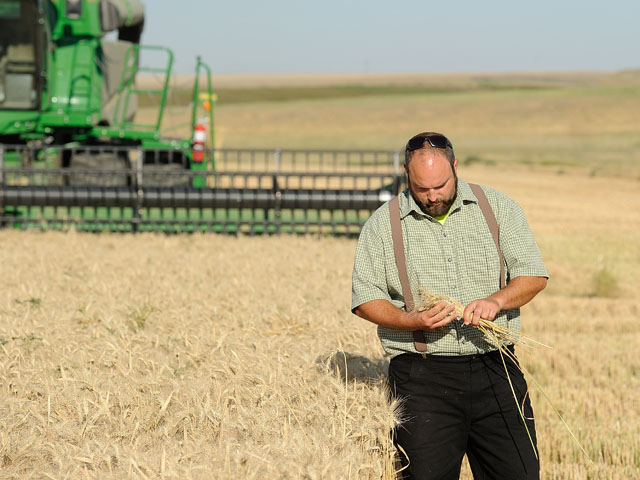Phillip Gross examines some wheat in his Warden, Washington, wheat fields, one of which yielded 202.5 bushels per acre, securing the high yield award in the 2018 National Wheat Yield Contest. Gross has won every high yield award in the contest's three-year history. (DTN photo by Jim Patrico)