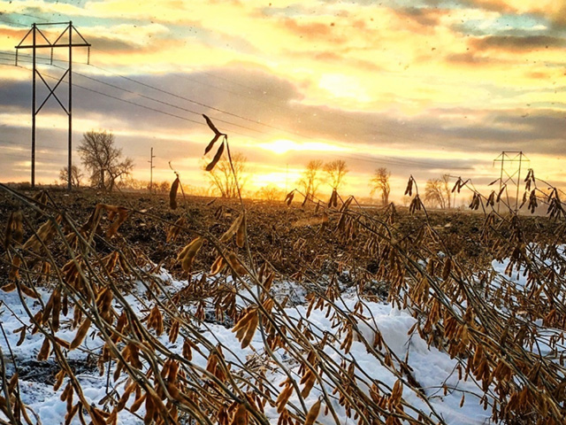 A week featuring very cold temperatures and periods of snow means many acres of soybeans and corn still to be harvested. (Photo courtesy of Kirsten Zeller)