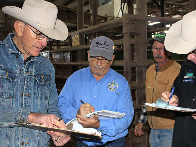 Cattle in the Missouri Steer Feedout go through an extensive grading protocol with (from left) Eldon Cole, livestock specialist with University of Missouri Extension, Dan Hill, Missouri Department of Agriculture and Jodie Pitcock, USDA. Gerald Eggerman, a producer from South Greenfield, participates in the program. (Photo by Linda Geist)