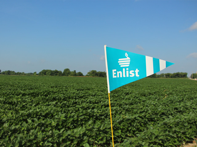 Soybeans tolerant to 2,4-D, glyphosate and glufosinate make for an interesting landscape this year. (Courtesy photo)