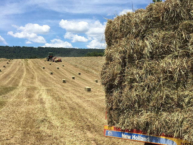 The hay market is seeing strong demand for forage, which is keeping prices high. Regionally, forage prices vary due to differences in supply and availability. (Photo courtesy of Kim Summers)
