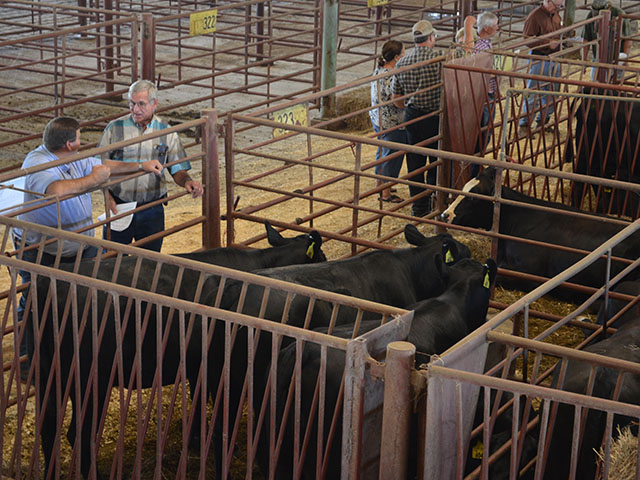 Bred heifer prices have moderated, and some areas fallen, compared to year-earlier levels. (DTN/Progressive Farmer photo by Victoria G. Myers)