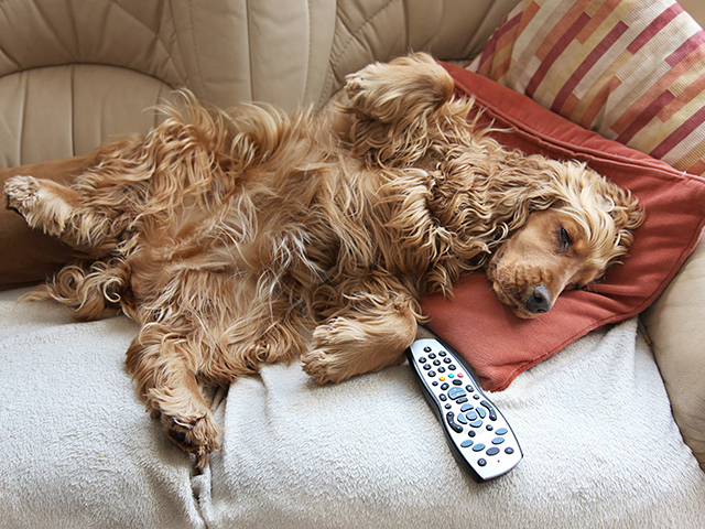 Sometimes weight management for pets is as simple as making sure they get a little less couch-time. (Getty Images)