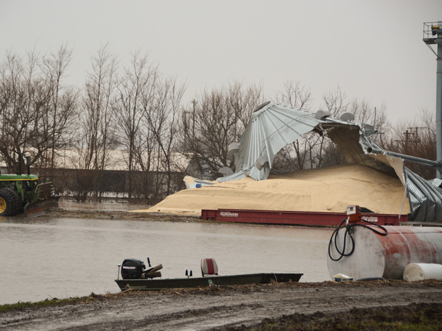 A busted grain bin with white corn in Hamburg, Iowa, last week. Without action from Congress, there will be no indemnity for such losses. (DTN photo by Chris Clayton)