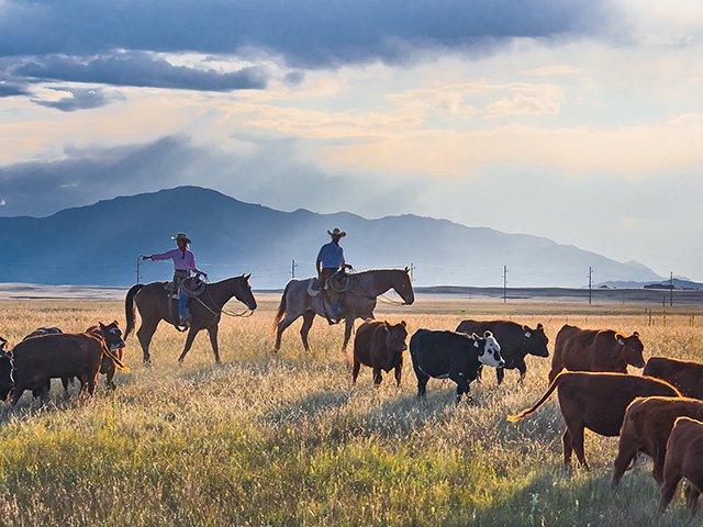 Jean and Scott Johnson take a holistic management approach to all the moving parts on their Flying Diamond Ranch. (Progressive Farmer photo by Rob Lagerstrom)