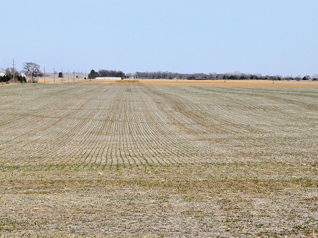 Rye grows in one of Kerry and Angela Knuth's fields, near Mead, Nebraska, Image by Russ Quinn