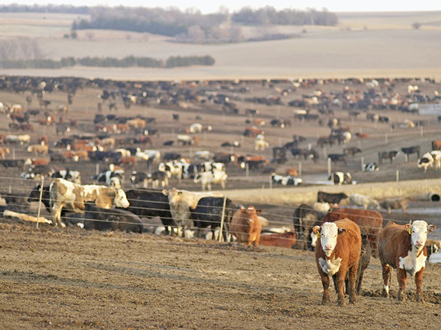 A new livestock emissions reporting rule may soon take effect, Image by Jim Patrico