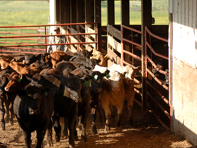 The Commodity Futures Trading Commission has been quietly increasing its monitoring of the livestock markets, according to CFTC Chairman Heath Tarbert. (DTN/Progressive Farmer file photo by Jim Patrico)
