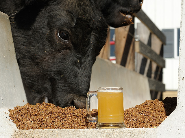 Not just any drink will do when you're trying to maximize gains in livestock.(DTN/Progressive Farmer photo by Jim Patrico)