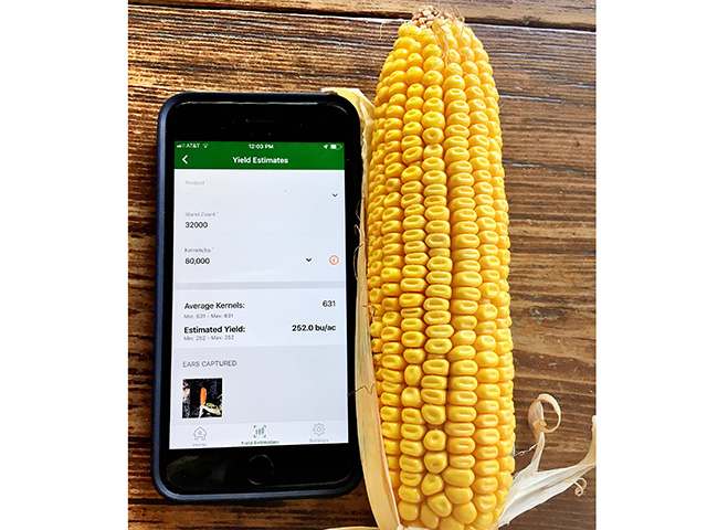 A smart phone app counts kernels quickly and discounts pollination and other problems. (Progressive Farmer image by Pamela Smith)