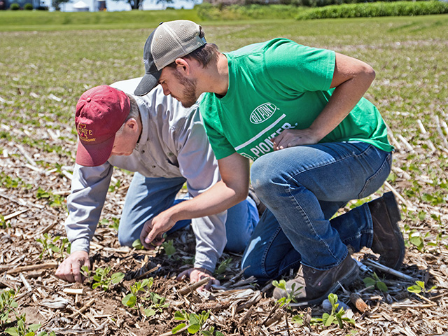 Joe Shirbroun (left) and Amos Troester check seed plant populations. (Progressive Farmer image by DARCY MAULSBY)
