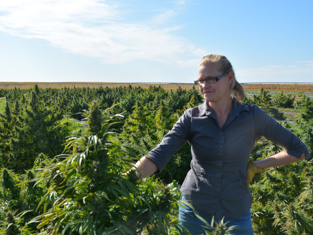 Bethleen McCall checks out some of her hemp plants last week near Yuma, Colorado. McCall, 35, got into the hemp industry after the 2014 farm bill. She credits hemp for allowing her to farm, but she said the new industry growth is bringing some regulatory challenges as well. (DTN photo by Chris Clayton)