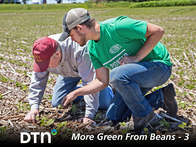 Joe Shirbroun (left) and Amos Troester check seed plant populations. (Progressive Farmer photo by Darcy Maulsby)