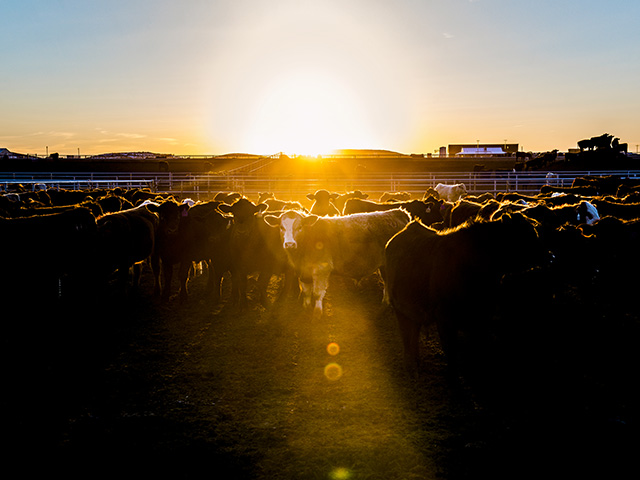 Blockchain sounds complicated, but it's really just another way cattle producers can connect with consumers. (DTN/Progressive Farmer photo by Joel Reichenberger)