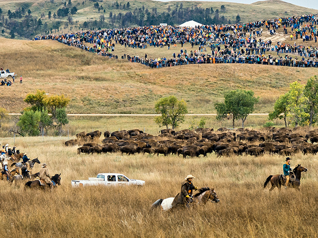 Nearly 20,000 enthusiastic visitors gathered for the 54th annual Governor's Buffalo Roundup in 2020. (Progressive Farmer image by Greg Lamp)