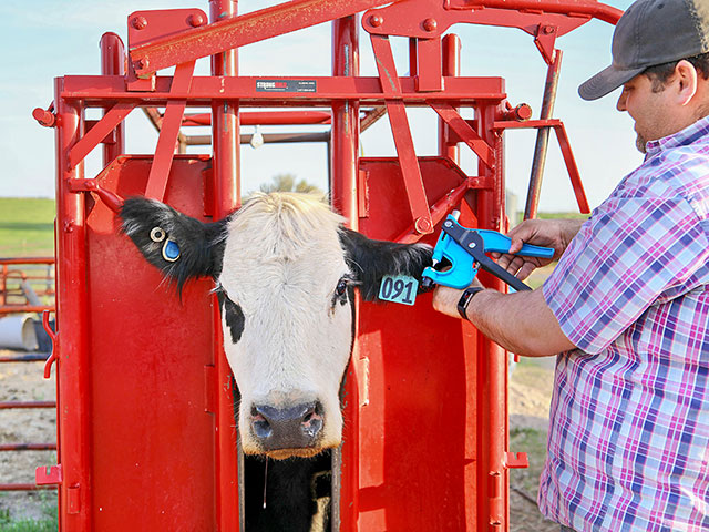 Tissue sampling units (TSUs) are the gold standard when it comes to collecting DNA samples on the farm today. (Photo courtesy Neogen)