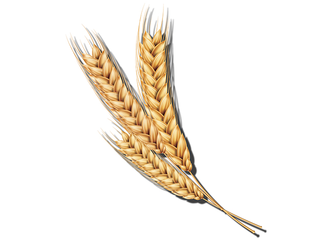 Wheat (Progressive Farmer image from Getty Images)