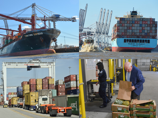 The Port of Savannah is seeing a growing business of produce imports, leading to a demand for more USDA inspectors to handle the volume. The cold containers used for produce also help poultry exports out of Savannah, which is the largest port in the country for poultry. (DTN photos by Chris Clayton)