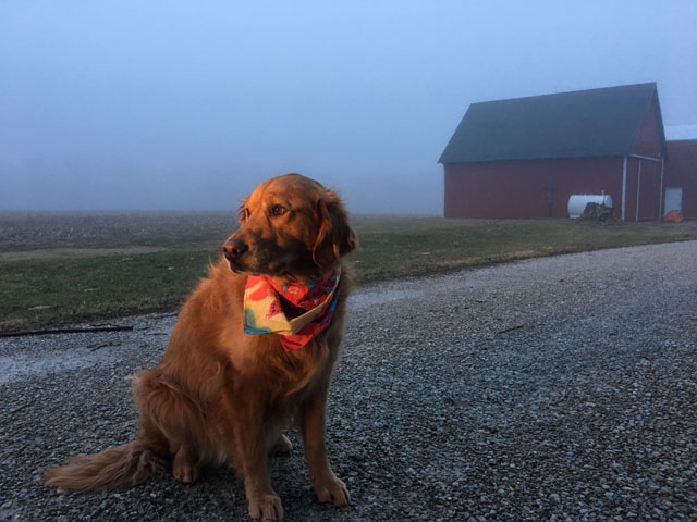 The future looks a little foggy -- even for dogs right now. But there are things you can do to relieve the tension. (DTN photo by Pamela Smith)