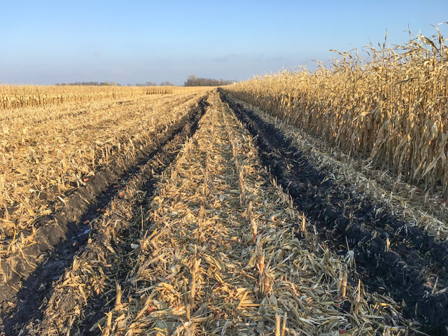 Soil health specialists urge farmers to wait until conditions are fit to resume field work this spring to repair ruts and avoid further compaction issues. (Photo by Jodi DeJong-Hughes, University of Minnesota Extension)